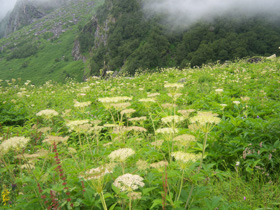 Valley of Flowers  - Adventure India vacations