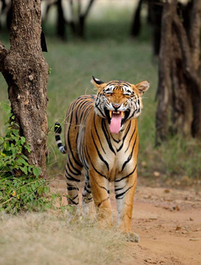 Wildlife Holiday in India